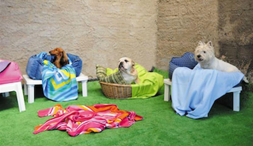 Hospedagem para cachorros - Viamão