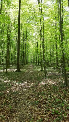 Der Wald um Höheinöd