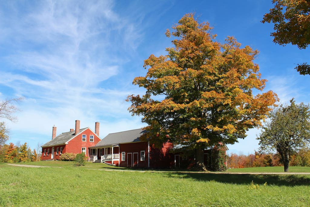 The house, maple tree and attached barns