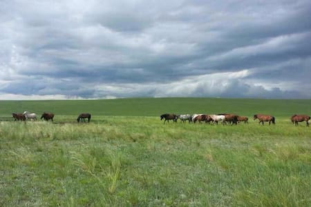 B&B in Inner-Mongolia in Yurts  - Ligue de Xilin Gol - Yurt
