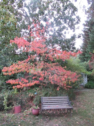 The same Dogwood tree in the Fall.