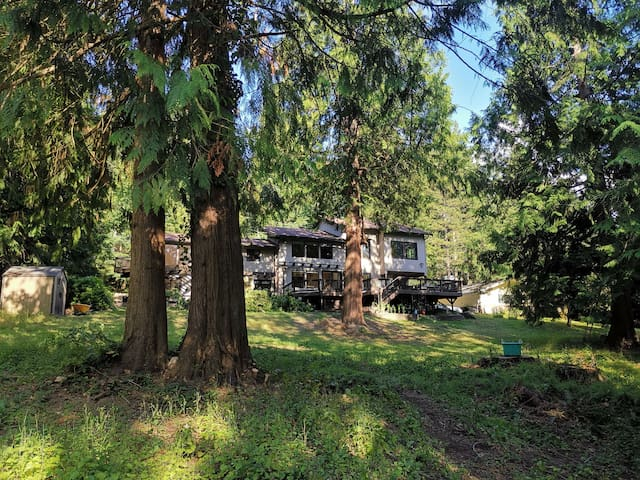 The 2 Forest Rooms--Great for family--and Views!!