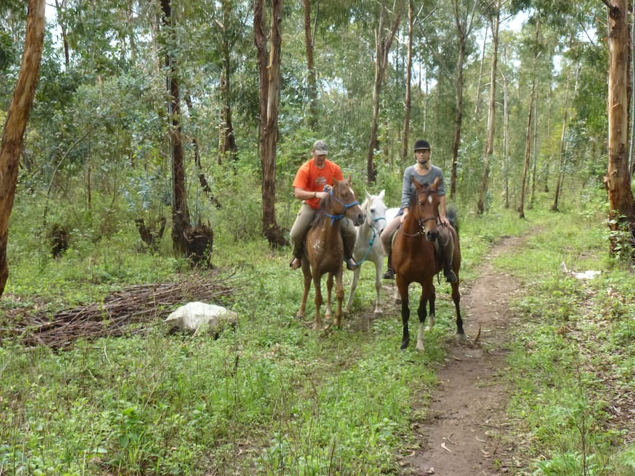 Horse trails in Loleza Mountain