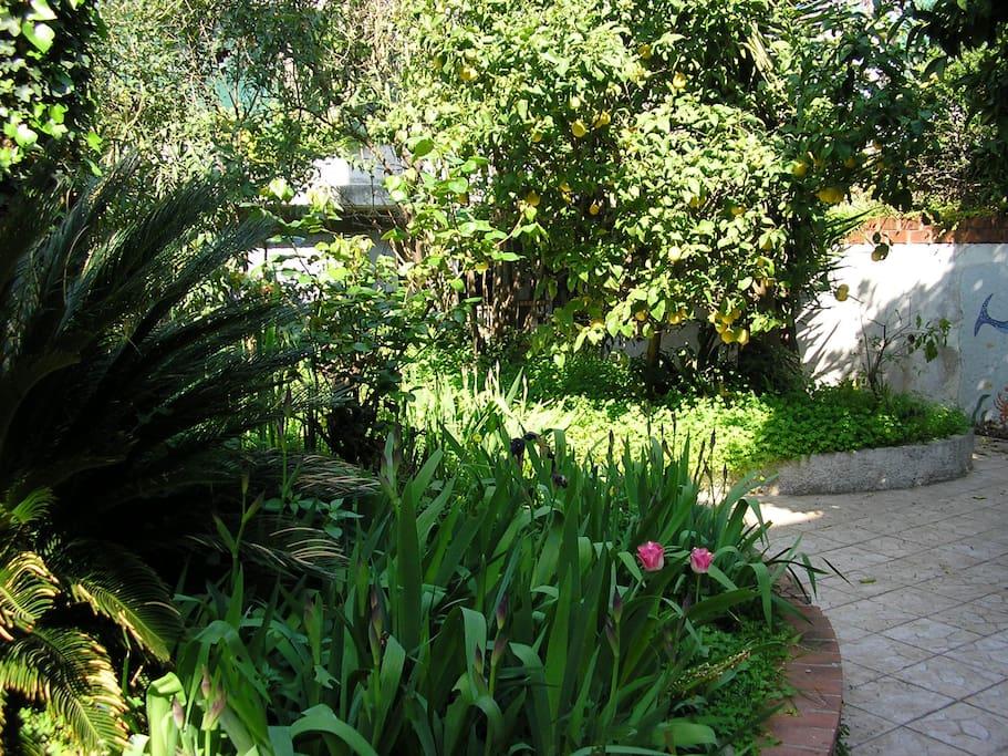 Appart rdc 85m dans villa jardin maisons louer for Jardin villa ratti nice