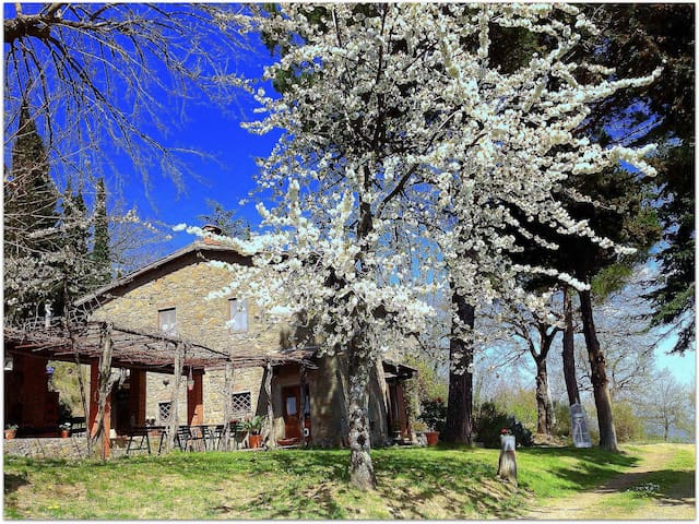 Stone house in a large park with pool and Jacuzzi - Lucolena In Chianti - Hus