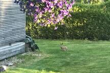 There is wild nunnien in our garden