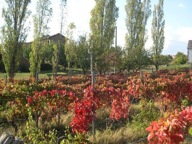 ITALY PIEMONTE  WINE/ GENOVA LIGURIA