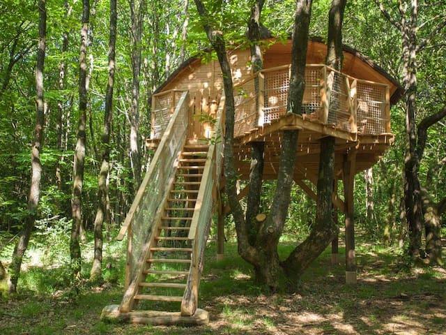Glamping Tree house Tinto Treuscoat