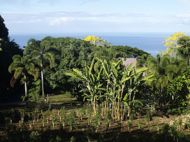 Mini Plantation with a View