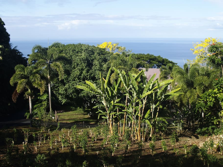 holualoa singles You can even look for top real estate agents in holualoa that specialize in selling, buying, speed, bargains, single family homes, condos, or townhouses.