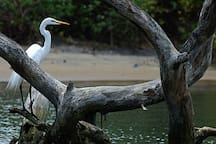 This bird sanctuary is located at Kadalundi, just twenty kilometers from the property and near the sea.