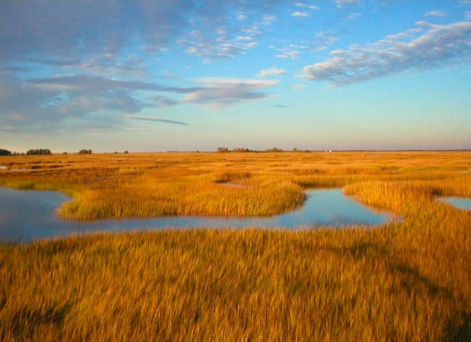 The most abundant habitat on the refuge is its 3,000+ acres of salt marsh, one of the most productive ecosystems in nature.  The refuge provides critical habitat for the threatened piping plover.
