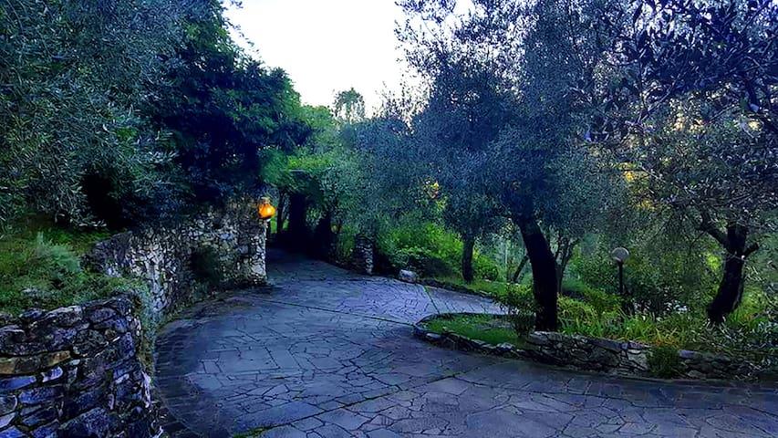 Belle Èpoque - l(URL HIDDEN) - Carrara - Bed & Breakfast