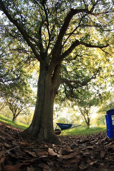 Shady nut trees. Nut harvest is from Easter till Oct.