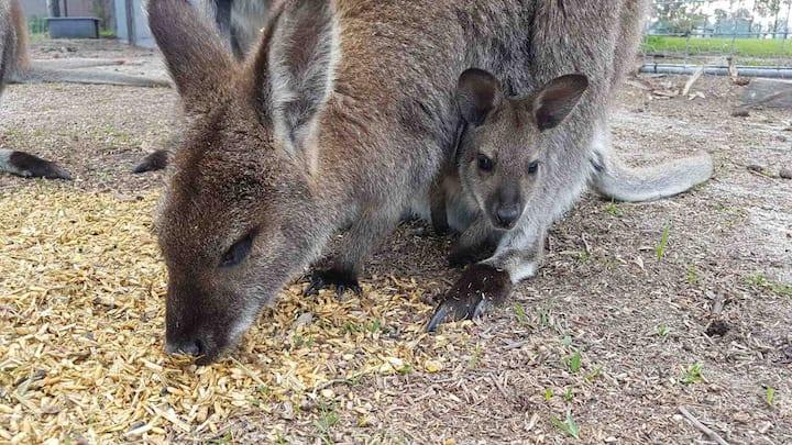 Wallaby Views