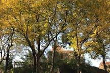 迷人的秋色