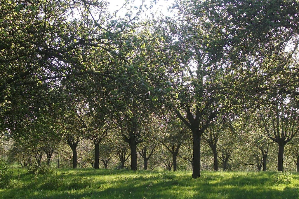 The neighbouring orchard in June