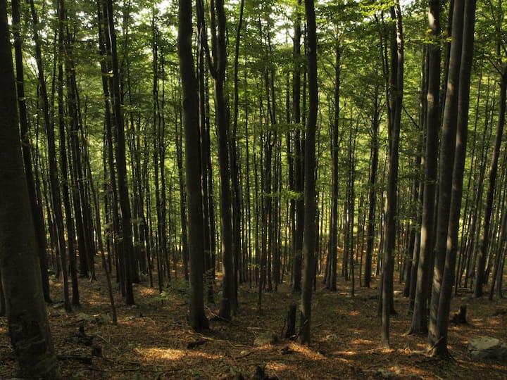 Risnjak forest
