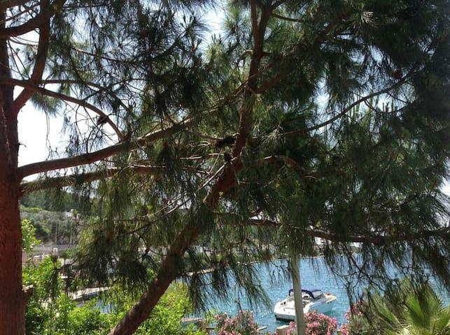 Çam,palmiye,güller,turkuaz,akasya)) - Güvercinlik Köyü