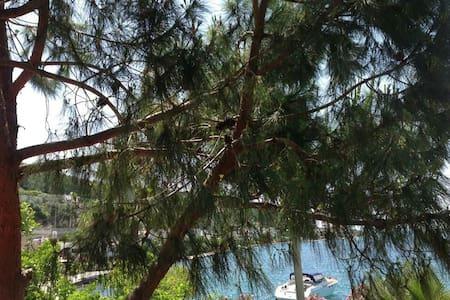 Çam,palmiye,güller,turkuaz,akasya)) - Güvercinlik Köyü - Huoneisto