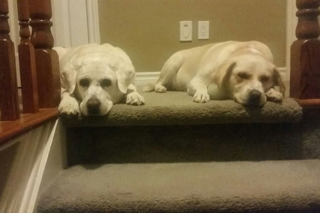 Roxy and Penelope look forward to having you as our guest.
