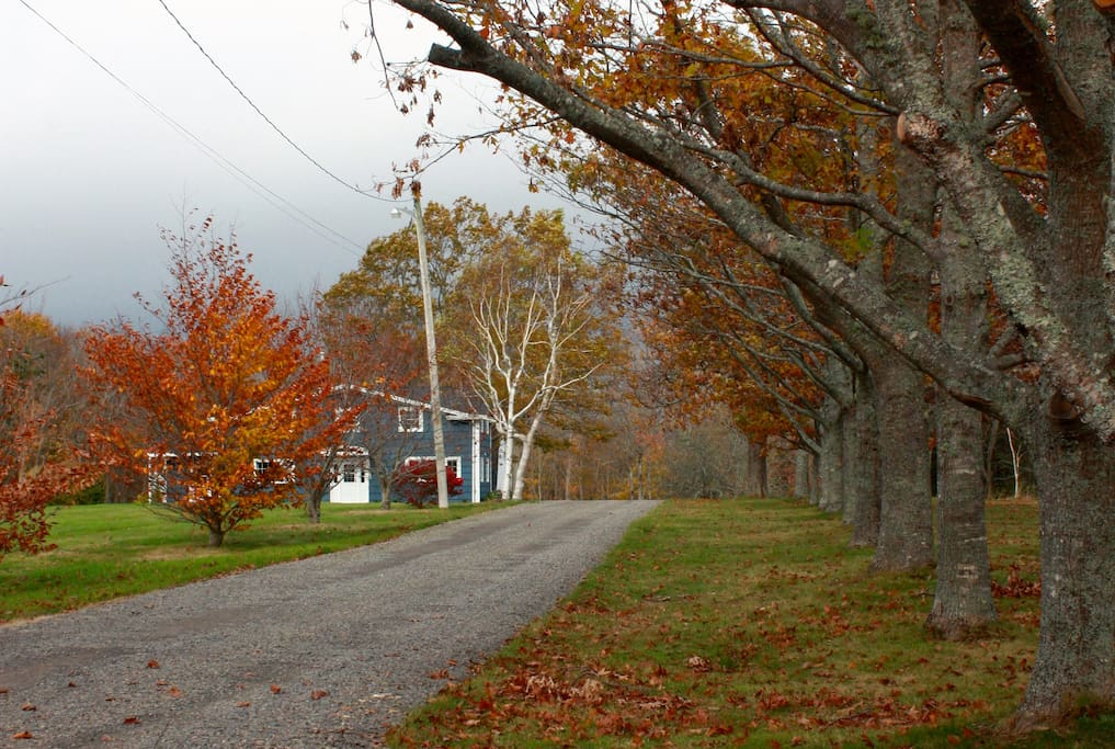 Century old oaks line the charming driveway.