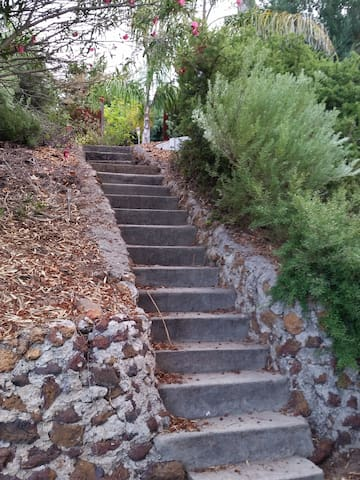 Stone steps to the property at side of house from driveway