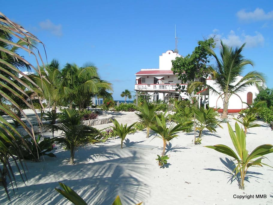 Spacious Beachfront hard with lots of palms and sand