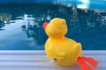 La piscina viene pulita tutti i giorni e controllato il livello di PH (non da lui)