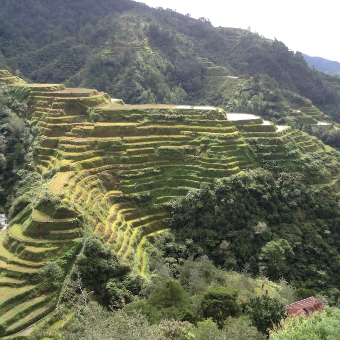 Banaue rice terraces. View from the main viewdeck.