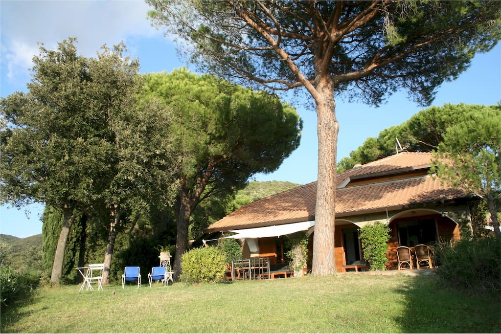 Pine, Olive trees and a typical mediterranean vegetation surround the property
