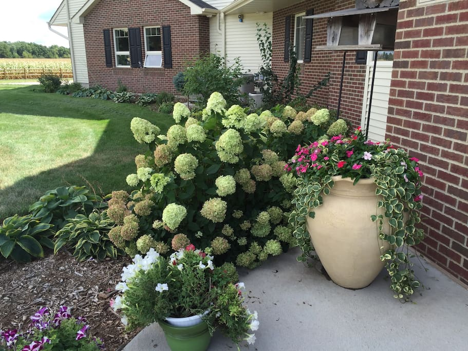 Our front yard and beautiful hydrangeas.