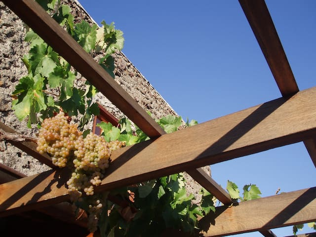 Uvas en el patio