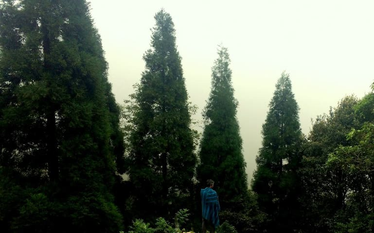 Does your heart pine for the cool, misty mountains?   View from the Herb Garden.
