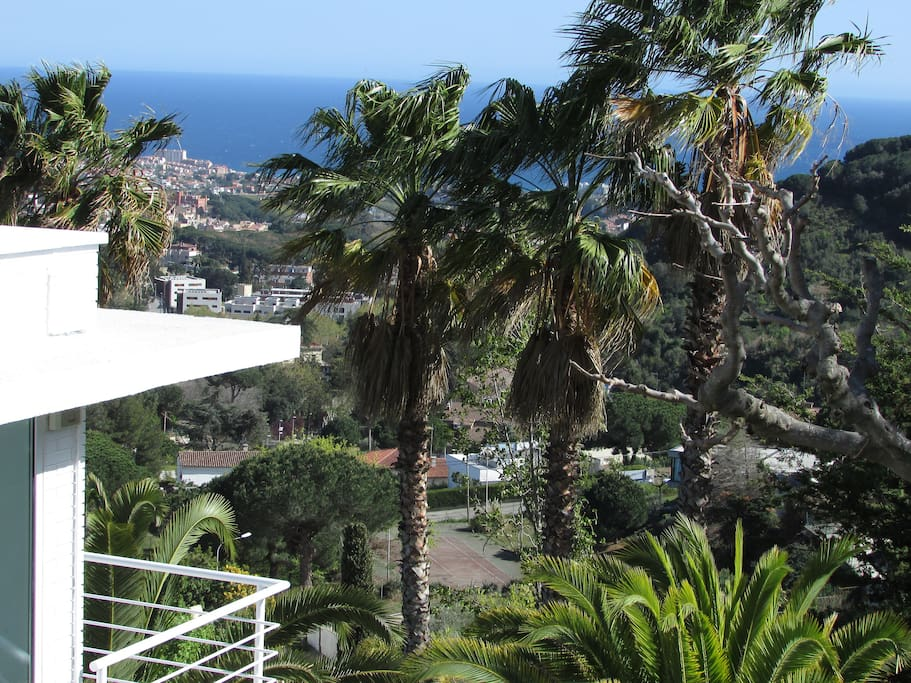 palm and sea view from the garden and terrace