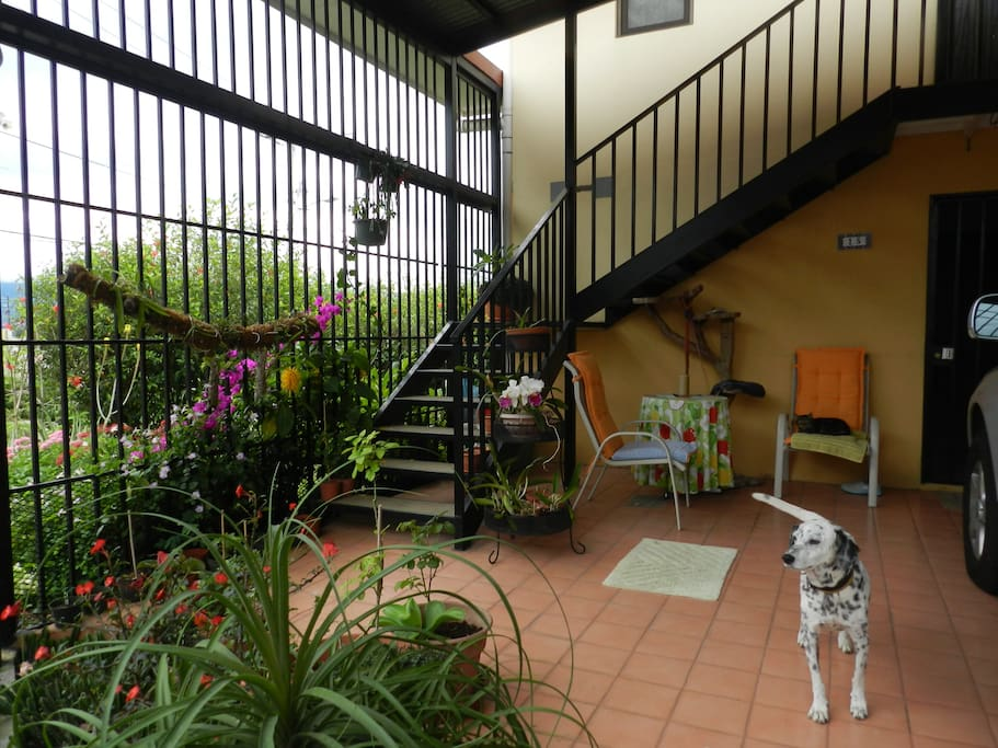 Stairs to guest quarters (with dog)