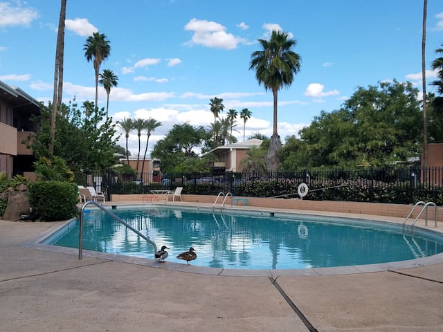 Central Tucson Retreat with Pool!