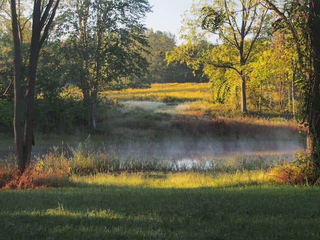 Beautiful back yard pond