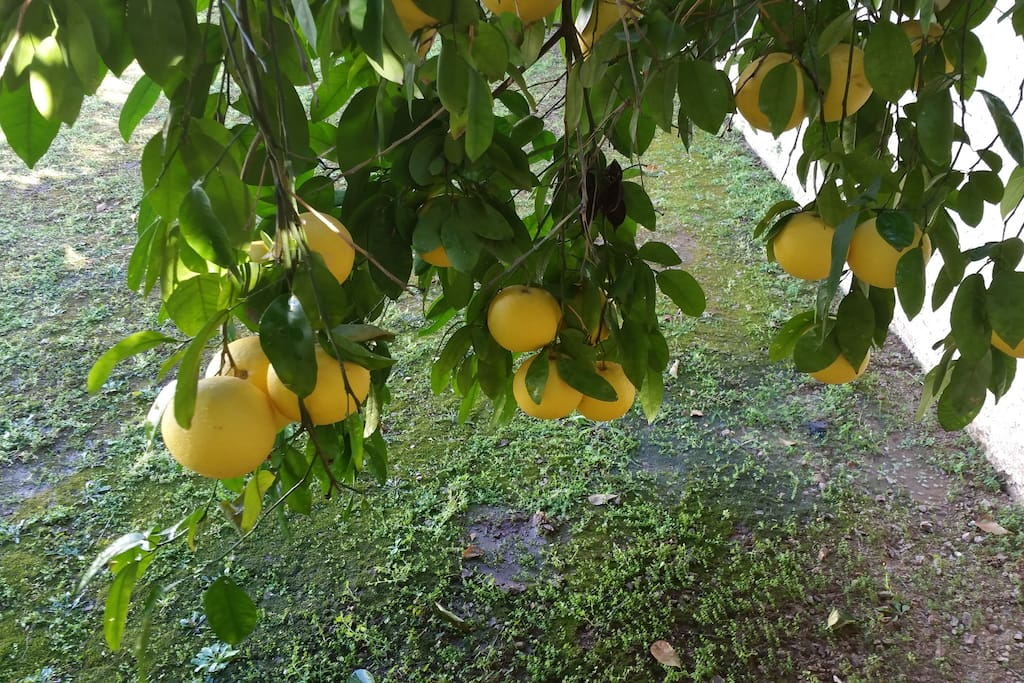 There are 30 fruit trees; including oranges, grapefruits, pomegranates and lemons.  Feel free to pick, eat and juice!