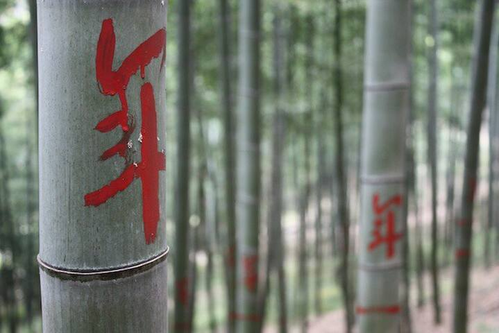 bamboo everywhere