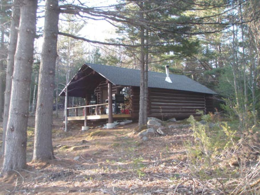 Rustic seclusion under the tall pines