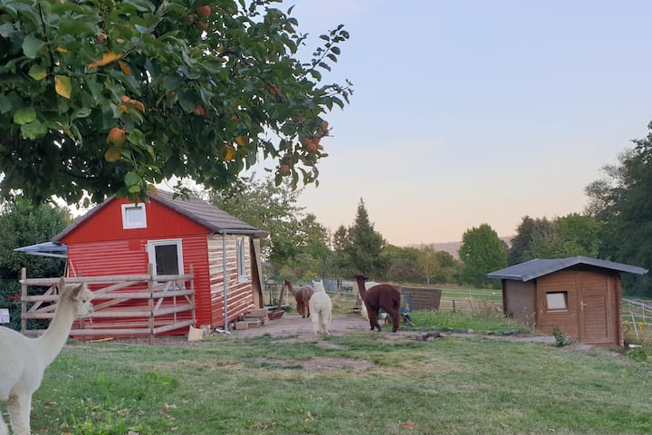 Übernachten auf der Alpakaweide-unsere kl. Hütte