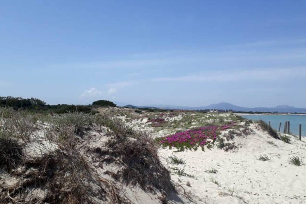 Le dune della spiaggia di Marina Maria