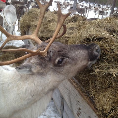 Miniguesthouse,10min to Museum, Meet our reindeer - Jokkmokk - Casa