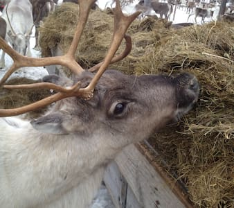 Miniguesthouse,10min to Museum, Meet our reindeer - Jokkmokk - Huis