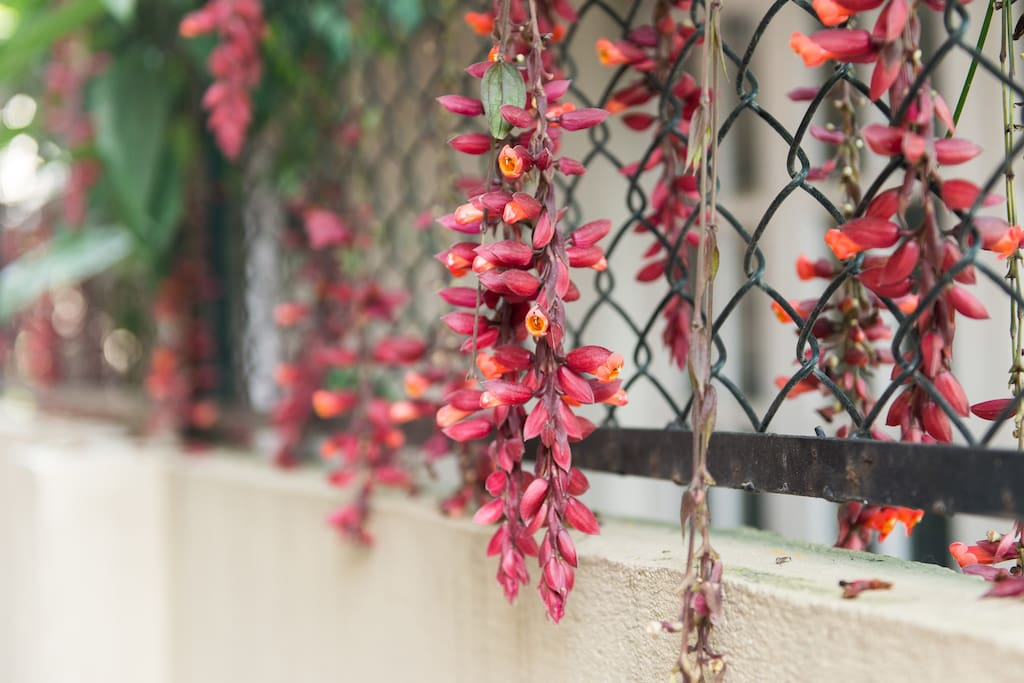 Flowers hanging around the home.