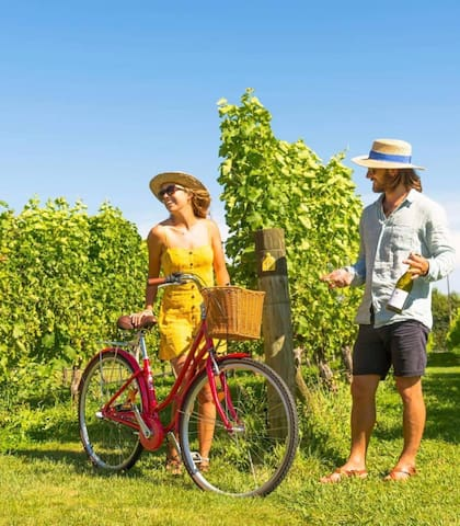 A NZ Must Do! Cycling around the boutique Marlborough wineries - see 'Ride The Golden Mile'.