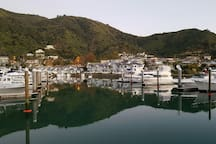 The Picton Marina where you may see Gannets, King Shags, Stingrays, Seals, Starfish and much more.