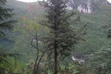 I boschi vicino la casa