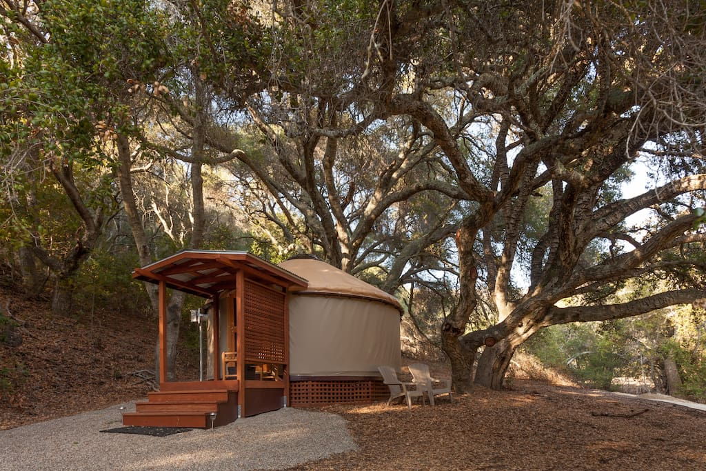 Colleen's Cabana sits all on its own under a giant oak.